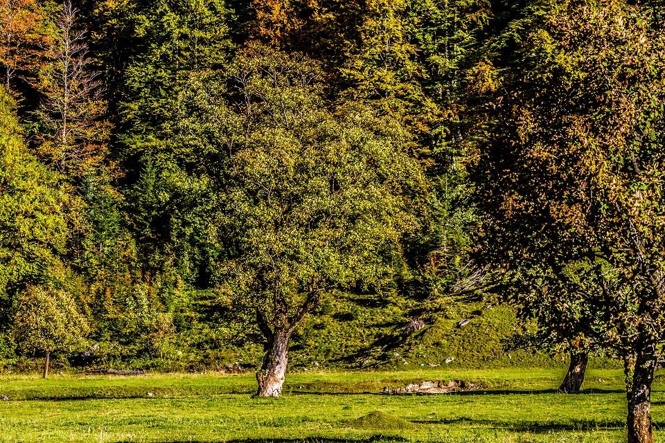 Waldbestattung in Peuerbach